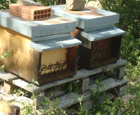 Miele millefiori e castagno Campidello