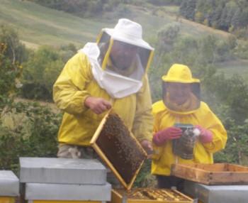 Vuoi fare l'apilcoltore? Un corso per imparare