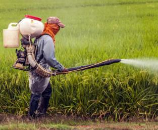 I pesticidi e il loro impatto sulla salute