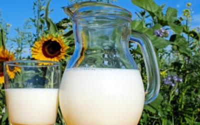 Imola, al via il Baccanale dedicato al latte