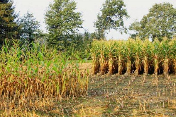 Una alimentazione sana senza pesticidi, se ne discute a Primola